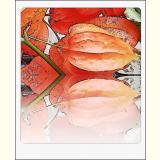 Formen, Farben / 02 /Bildkarte / 06