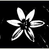 Formen, Farben /Floral, schwarz-weiß / 03
