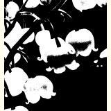 Formen, Farben /Floral, schwarz-weiß / 04