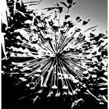 Formen, Farben /Floral, schwarz-weiß / 01