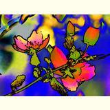 Formen, Farben / 02 /Blüten / 06