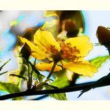 Formen, Farben / 02 /Blüten / 01
