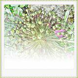 Formen, Farben /Floral / 08