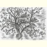 EURO-RETTUNGSHUT /Magnolienbaum im Frühling